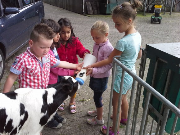 Melkveebedrijf Piet van Meintjes Hoeve (Heukelom)
