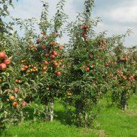 Fruitteeltbedrijf De Stuifakker (Zevenbergschen Hoek)