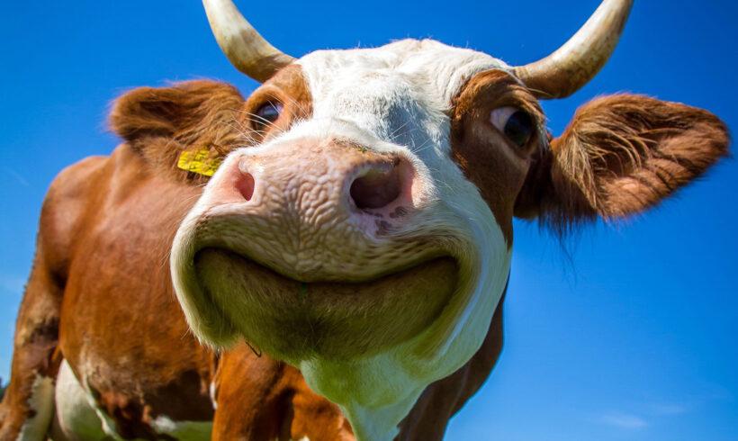 Boerderijeducatie per 19 mei 2021 weer opgestart! (Update: ook binnen!)
